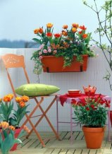 SPring containers with Tulipa, Bellis, Erysimum and Hedera on orange themed balcony