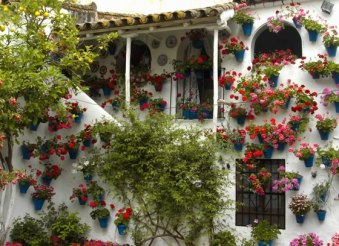 jardin vertical-patio andaluz2