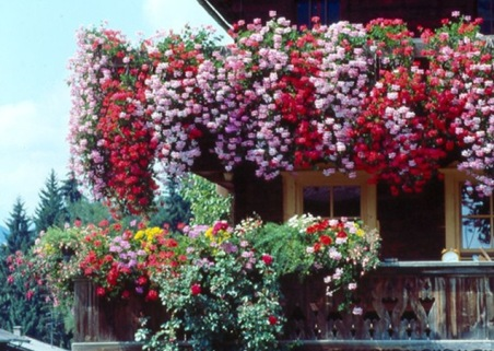 jardin vertical03